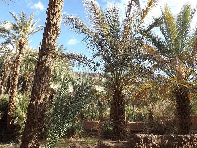 [Maroc Camp/Dernières nouvelles]  Zagora : Prends ton temps Dscf0011
