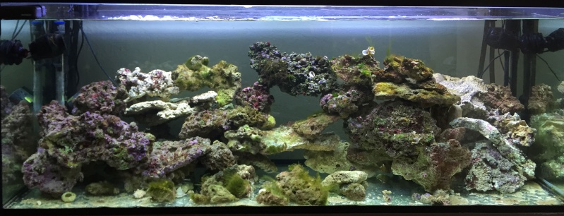 L'eau de mer... enfin j'y suis... Img_5910