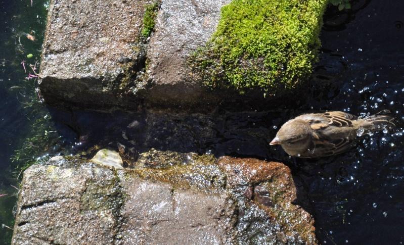 Aveyronnaise 1 : Le bain des moineaux de Conques Bain_d10