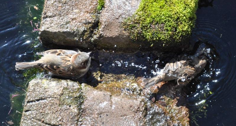 Aveyronnaise 1 : Le bain des moineaux de Conques Bain_d12