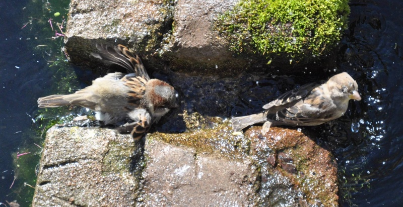Aveyronnaise 1 : Le bain des moineaux de Conques Bain_d13