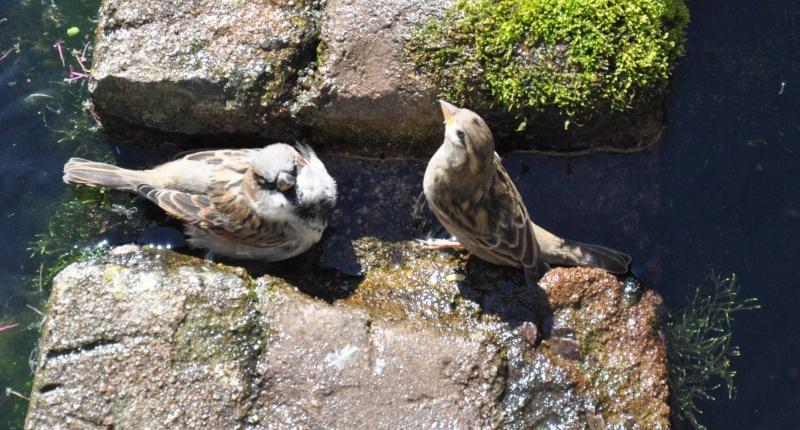 Aveyronnaise 1 : Le bain des moineaux de Conques Bain_d14
