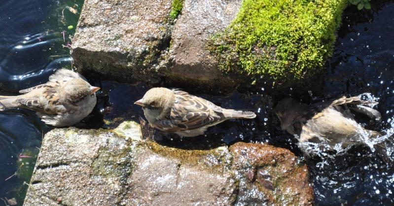 Aveyronnaise 1 : Le bain des moineaux de Conques Bain_d17