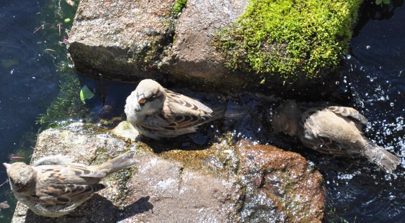 Aveyronnaise 1 : Le bain des moineaux de Conques Bain_d18