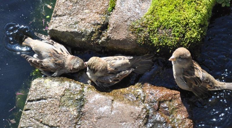 Aveyronnaise 1 : Le bain des moineaux de Conques Bain_d19