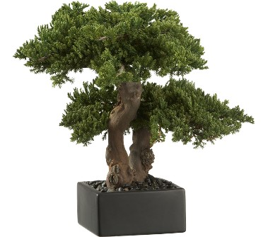 If you were a tree what tree would you be? Bonsai10