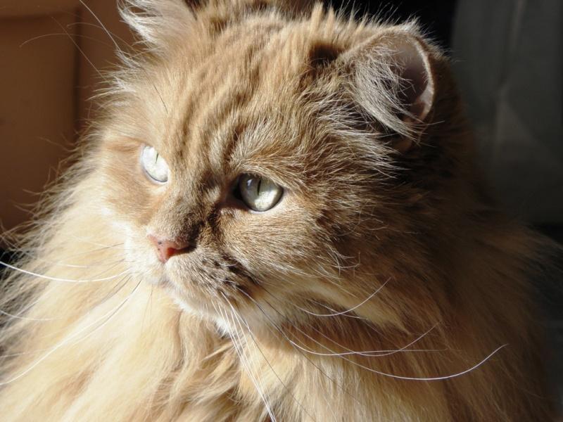 Le chat qui se veut plus féroce que le tigre Melba_13