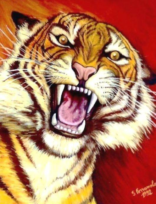 Le chat qui se veut plus féroce que le tigre Tigre11