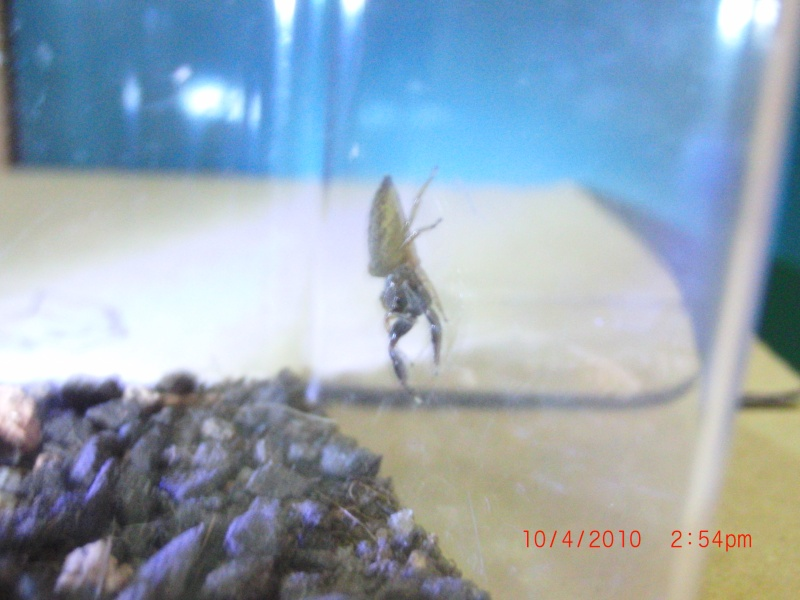 My pet jumping spider! Cimg0418