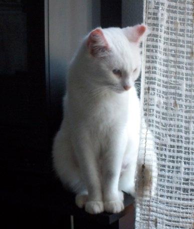 Ohé, petite chatte sourde 08092210