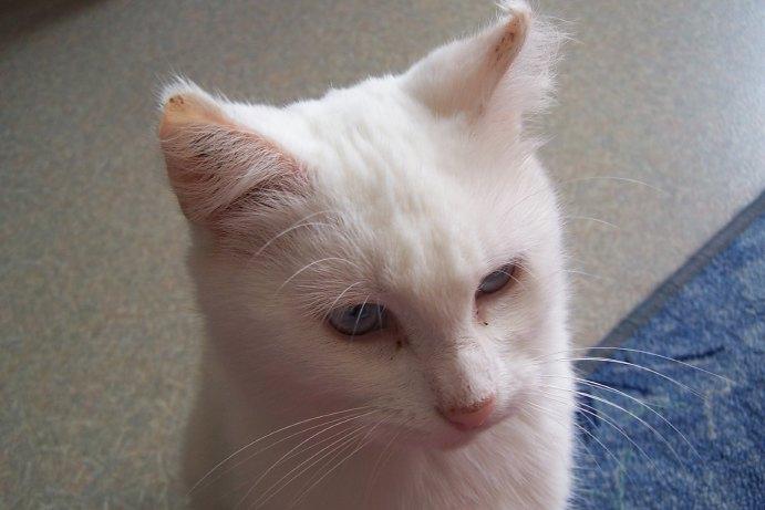 Ohé, petite chatte sourde 08092910