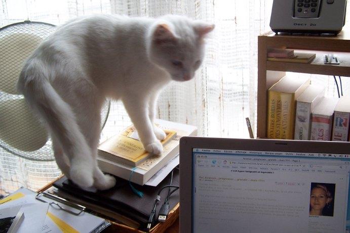 Ohé, petite chatte sourde - Page 2 08100510