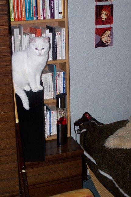 Ohé, petite chatte sourde - Page 2 08111610
