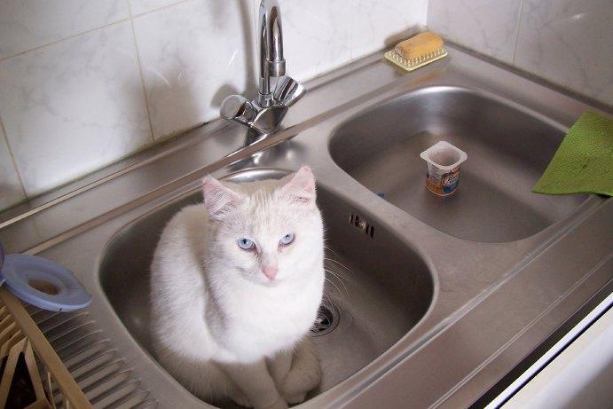 Ohé, petite chatte sourde - Page 3 08112011