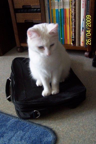 Ohé, petite chatte sourde - Page 3 09042610