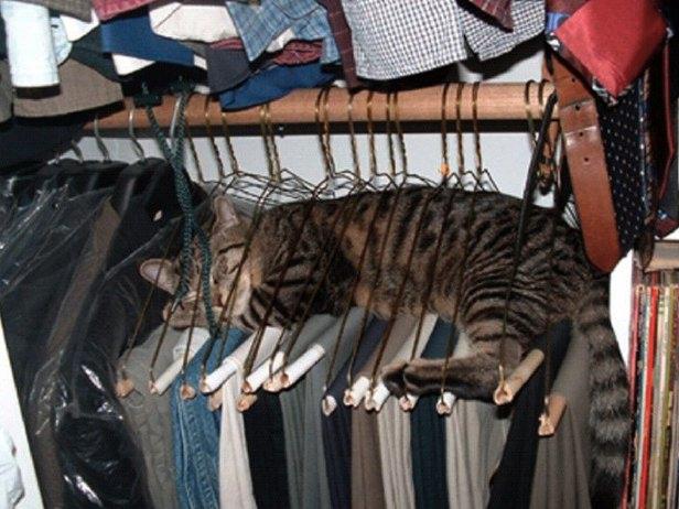 8 août : Journée internarionale du chat — le chat dans toute sa beauté - Page 2 Chat_c10