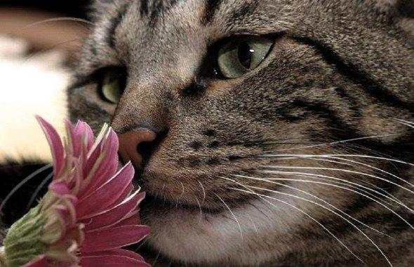8 août : Journée internarionale du chat — le chat dans toute sa beauté - Page 2 Chat_f10