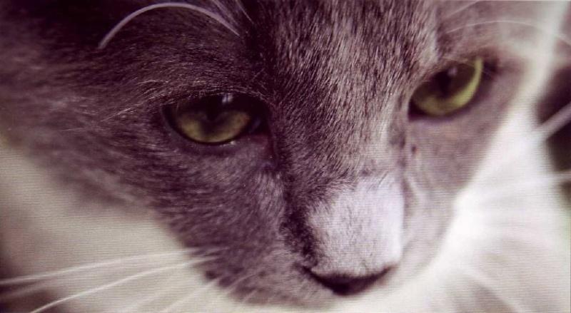 8 août : Journée internarionale du chat — le chat dans toute sa beauté - Page 3 Chat_m10
