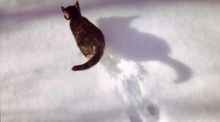 8 août : Journée internarionale du chat — le chat dans toute sa beauté - Page 2 Chat_n10