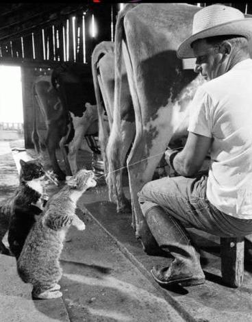 8 août : Journée internarionale du chat — le chat dans toute sa beauté Chat_p12