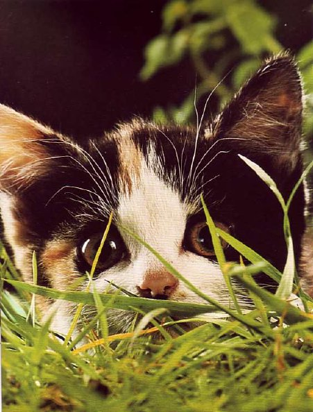 8 août : Journée internarionale du chat — le chat dans toute sa beauté - Page 3 Chaton15
