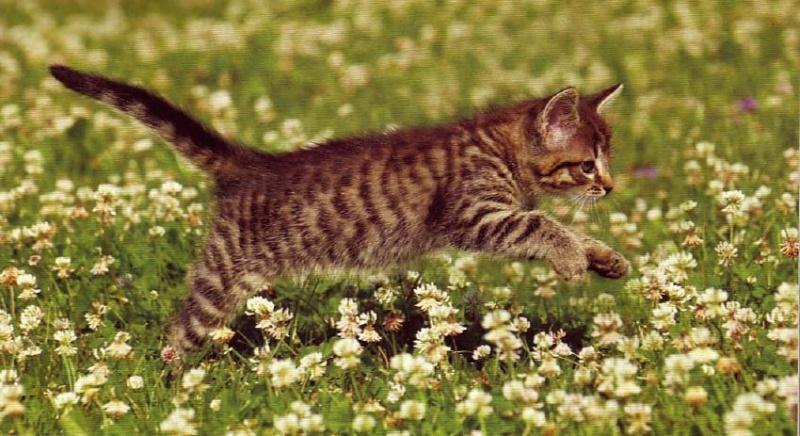 8 août : Journée internarionale du chat — le chat dans toute sa beauté - Page 3 Chaton16