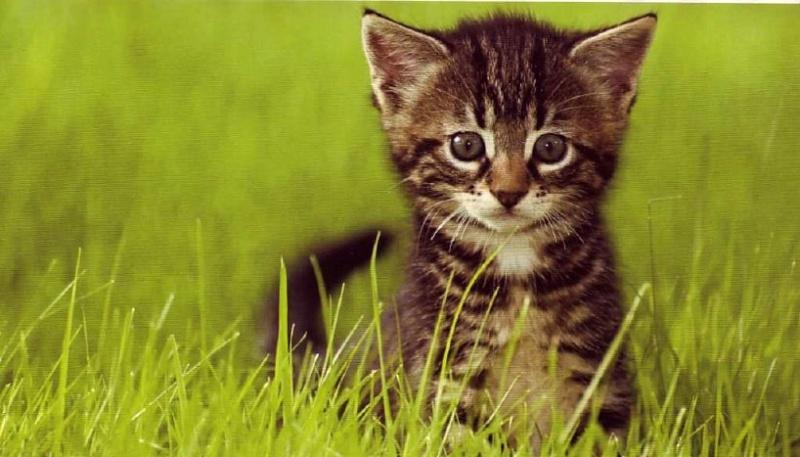 8 août : Journée internarionale du chat — le chat dans toute sa beauté - Page 3 Chaton17