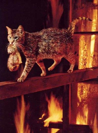 8 août : Journée internarionale du chat — le chat dans toute sa beauté - Page 2 Chatte12