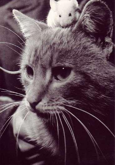 8 août : Journée internarionale du chat — le chat dans toute sa beauté Jolie_10