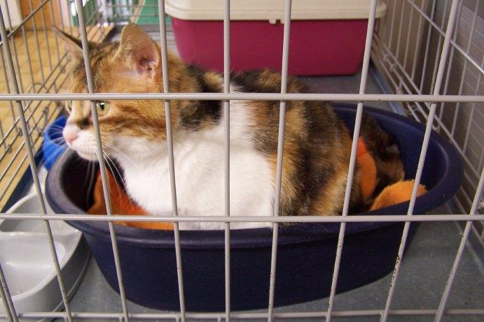 8 août : Journée internarionale du chat — le chat dans toute sa beauté Spa_2910
