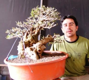 Bonsai from the Andes in South America Ecuador 15_sep11