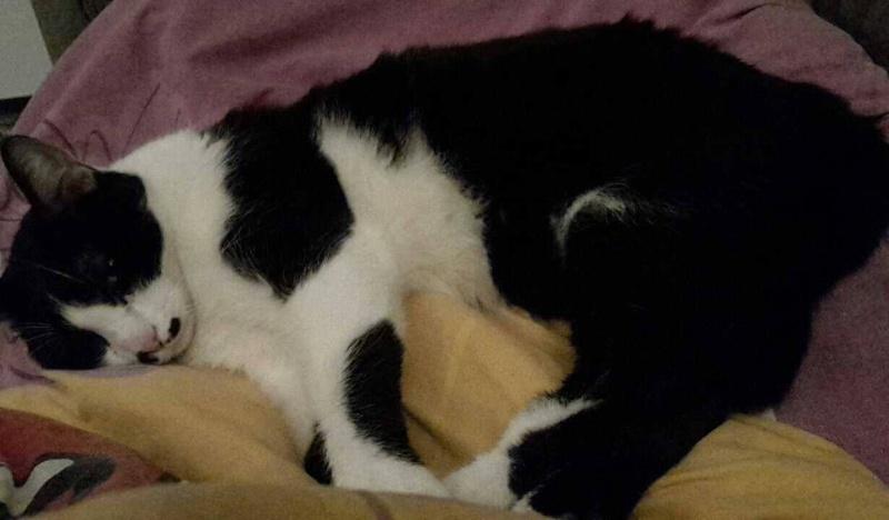 Mikado, noir et blanc, né en Mars 2014  Mikado11