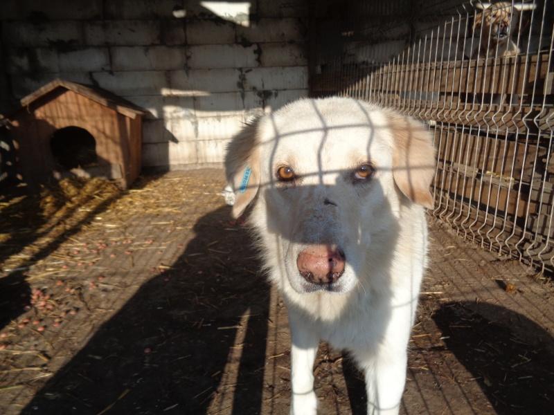 BALANUCH, mâle croisé berger sauvé de Pallady, né en 2009 parrainé par Nathalie G. -Gage Coeur  Myri_Bonnie-SC-R-SOS- 07211