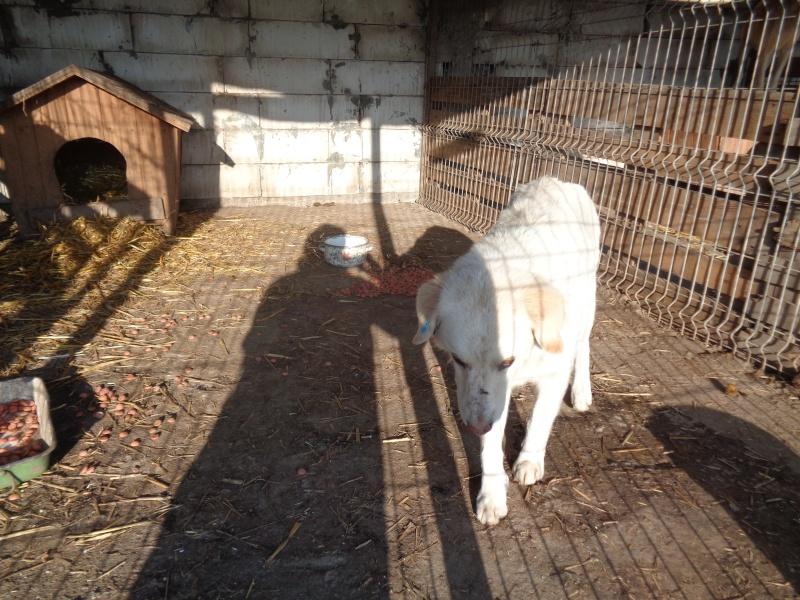 BALANUCH, mâle croisé berger sauvé de Pallady, né en 2009 parrainé par Nathalie Gamblin-Gage Coeur  Myri_Bonnie-SC-R-SOS- 07510
