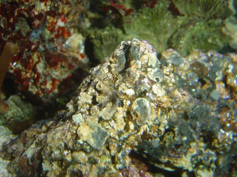aquari26.jpg