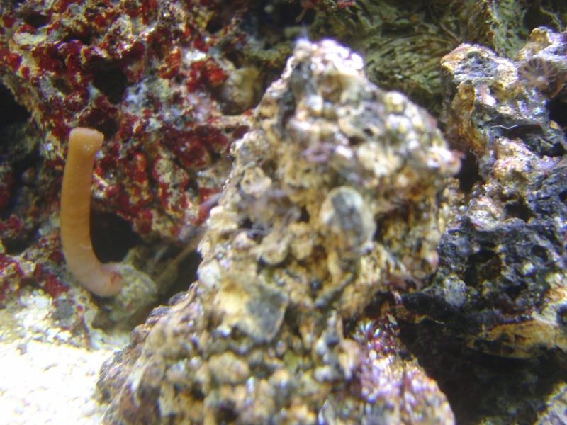 aquari27.jpg