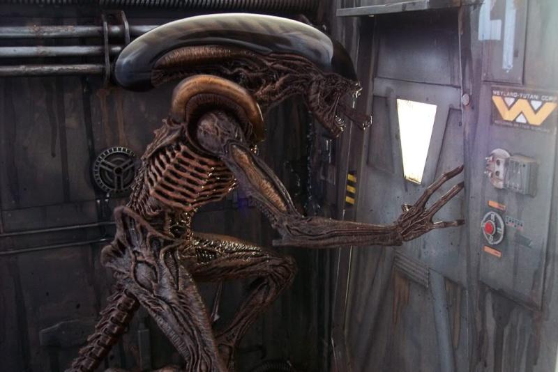 Diorama Alien&Predator. 100_5710