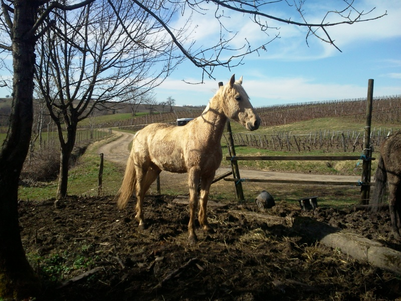 LUTSIANO dit LULU- ONC Selle né en 2004 - adopté en mars 2011 par Isaline Photo021