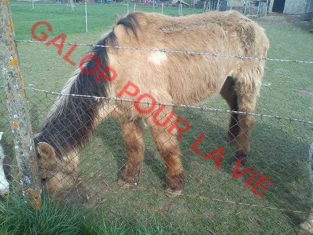 SAM - Poney typé Henson né en 1986 - adopté en septembre 2011 par Emeline Sam_2_10