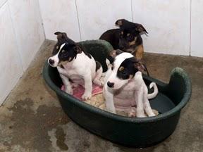 Des chiens et chiots à sauver de fourrière espagnole-très urgent  _a086510