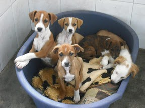 Des chiens et chiots à sauver de fourrière espagnole-très urgent  Cachor10