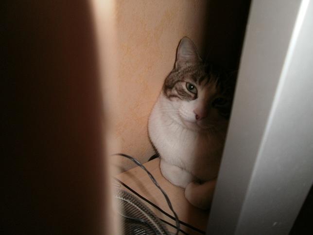 Tigrou, chat male castré de 3 ans (adopté) P1010412