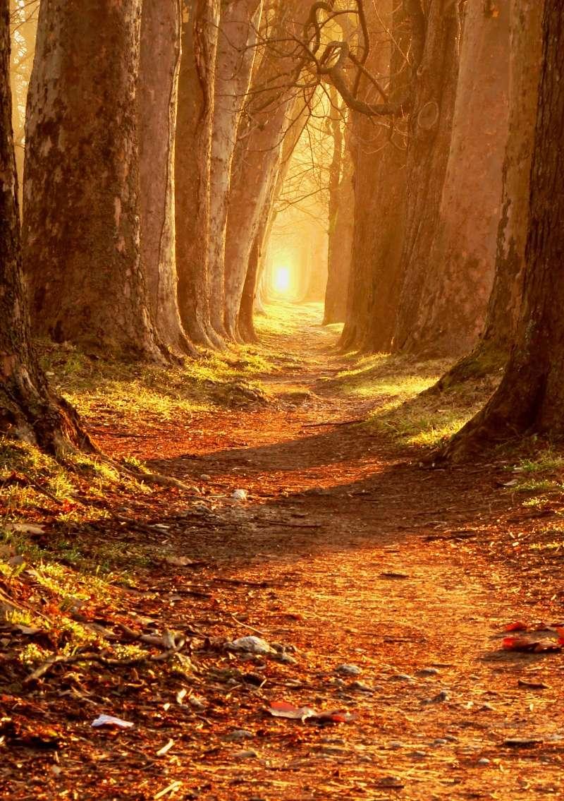Chemins qui ne mènent nulle part Waldwe10