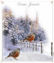 Cairns de Janvier 2016 - Page 2 Oiseau10