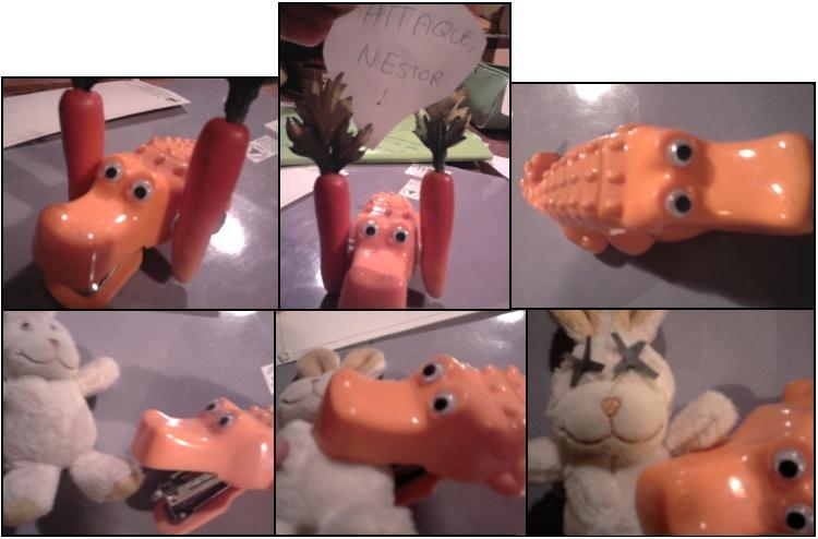 Je vois la vie en Orange, Je vois la vie côté Carotte Romanp15