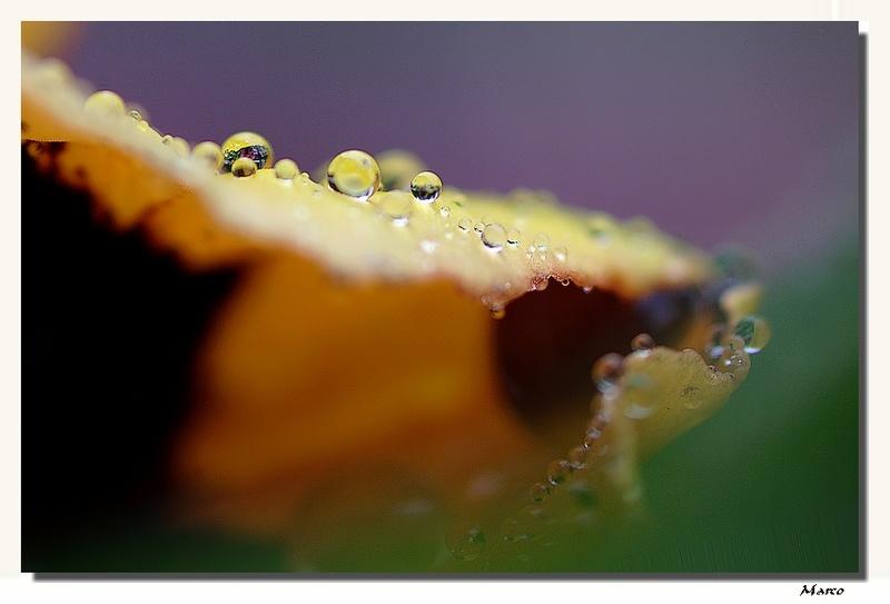 FIL ROUGE: Quelques gouttes d'eau pour un océan  - Page 3 Perles10
