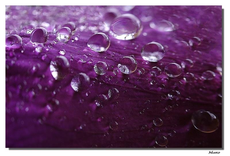 FIL ROUGE: Quelques gouttes d'eau pour un océan  - Page 3 Perles12