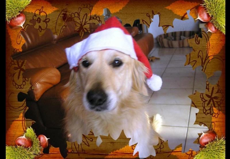Concours photos de vos chiens, chats à l'occasion des fêtes de fin d'année - Page 2 Concou10