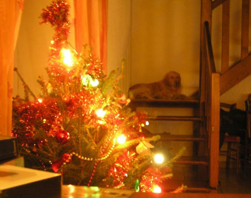 Joyeux Noël ! Ppp_412