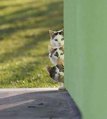 Les chats curieux et craintifs 11796210